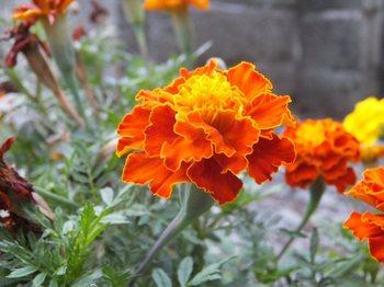 花(600)015.jpg