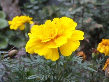 花(600)018.jpg